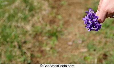 Posy of flowers Viola odorata in hand a girl