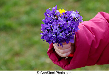Posy of flowers Viola odorata in hand a little girl