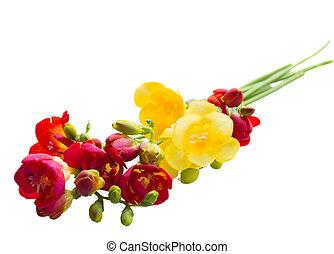 posy of freesias flowers