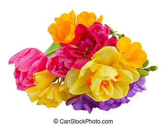 posy of spring flowers - posy of of spring flowers isolated...
