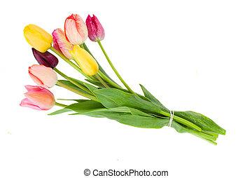 Posy of tulips flowers