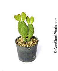 photos et images de cactus vari t 635 photographies et images libres de droits de cactus. Black Bedroom Furniture Sets. Home Design Ideas