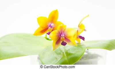 pot, brouillé, orchidée, fond, rare, beau