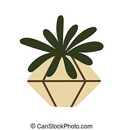 pot., eheveria, cactus, keramisch, succulent