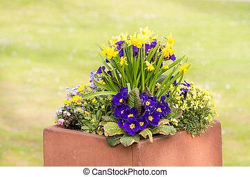 frais plante fleur menthe pot plante fleurir pot photographie de stock rechercher. Black Bedroom Furniture Sets. Home Design Ideas