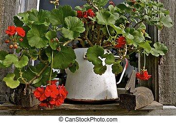 pot, fleurs, géranium, émail