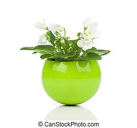 pot fleurs, saintpaulia, arrière-plan vert, fleurs blanches