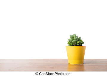 pot, haworthia, jaune