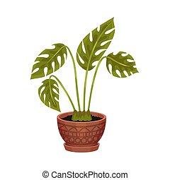 pot., houseplant, illustration, arrière-plan., vecteur, blanc