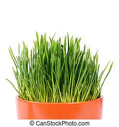pot, isolé, arrière-plan vert, blanc, herbe