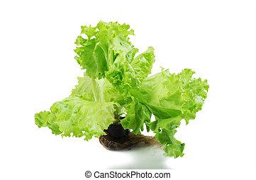 pot, isolé, salade verte, fond, croissant, blanc