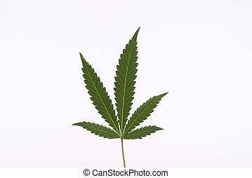 Single cannabis (marijuana) leaf isolated over white background