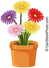 Pot of colorful flowers on white background