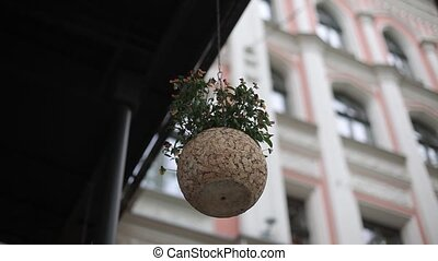 Pot of flowers on the background of the house in Riga