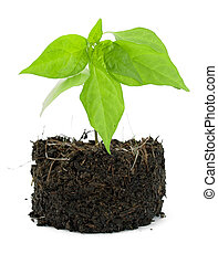 Pot plant with its compost exposed against a white background