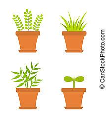 Pot plants - Plants growing in pots. Vector illustration