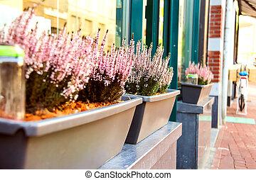 Pot plants on a street in Dutch city