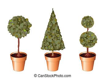 Pot plants - Vector of standard trees in terracotta pots ...