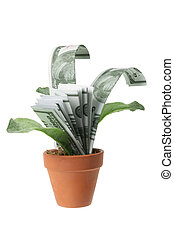 Pot Plants with Dollar Notes