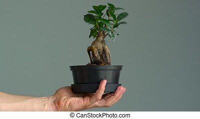 Pot with bonsai in a man's hand. Close-up. Slow motion - Pot...