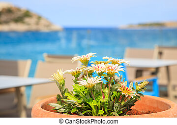 Pot with flowers on a blue sea and sky background