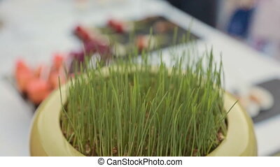 Pot with green grass on a table in catering