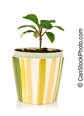 pot with house plant