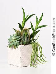 pot with mixed succulent plants