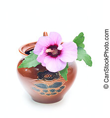 Pot with pink flower