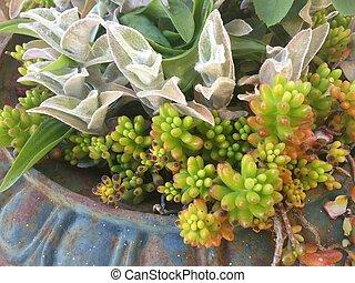 pot with succulent plants