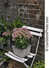 pot witn kalanchoe on the white chair as a decoration of the...