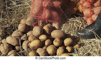 Potato bags on grass close up.Wildlife animals wild feeding...