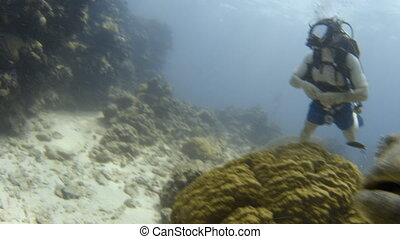 Potato cod and its giant features - A shot of a swimming...