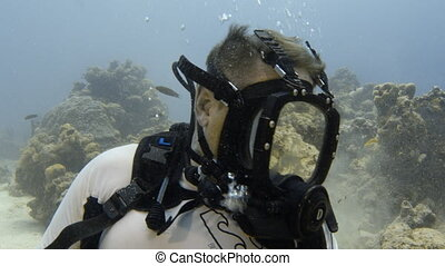 Potato cod swimming around a diver - A shot of a sitting...