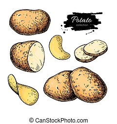 Potato drawing set. Vector Isolated potatoes heap, sliced pieces and chips. Vegetable artistic style illustration. Detailed vegetarian food sketch. Farm market product. Great for label, banner, poster