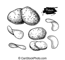 Potato drawing set. Vector Isolated potatoes heap, sliced...