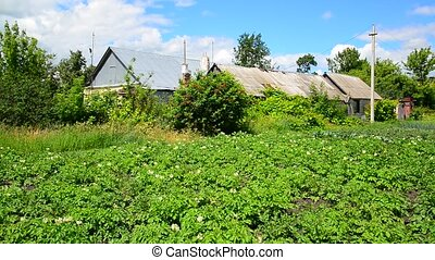 Potato field in front of rural house in Russia