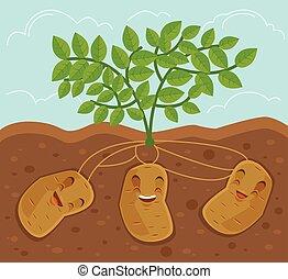 Potato grown underground. Vector flat cartoon illustration