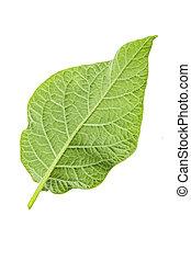 potato leaf clipping path
