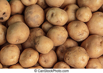 Potato - Many piles of potatoes lined up nicely.