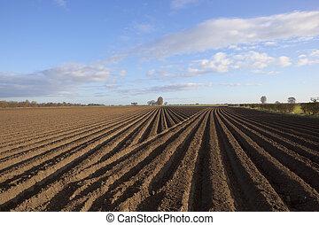 potato row patterns