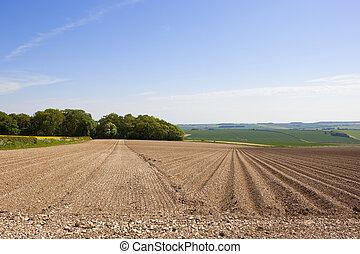 potato rows and woodland