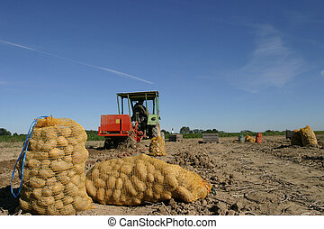 potato - symbol photo
