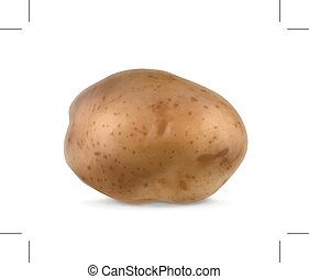 Potato, vector illustration, isolated on white background