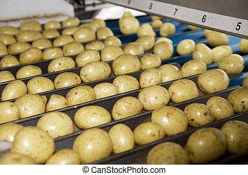 potatoe, 産業