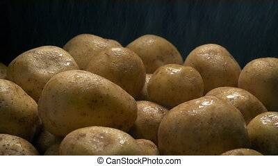 Pile of potatoes are washed in water spray
