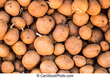 Potatoes raw vegetables food in market for pattern texture and background