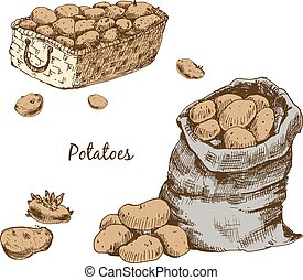 Potatoes. Set of hand drawn graphic illuctrations