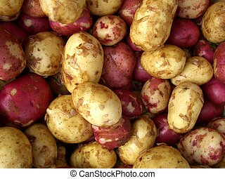 potatoes - red and white potatoes at market