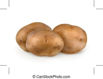 Potatoes, vector illustration, isolated on white background